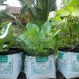 potting mixture used for grow bags