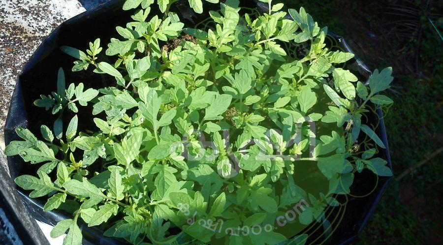 seeding in grow bags