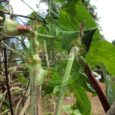 Vegetable Cultivation info