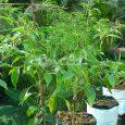 drip irrigation for terrace garden