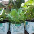 grow bags usage in organic farming