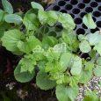Vegetable Planting Tips