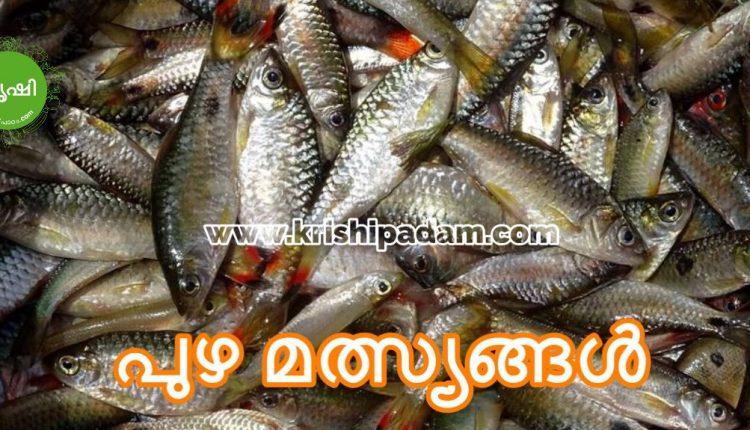 Puzha Maslyam Kerala